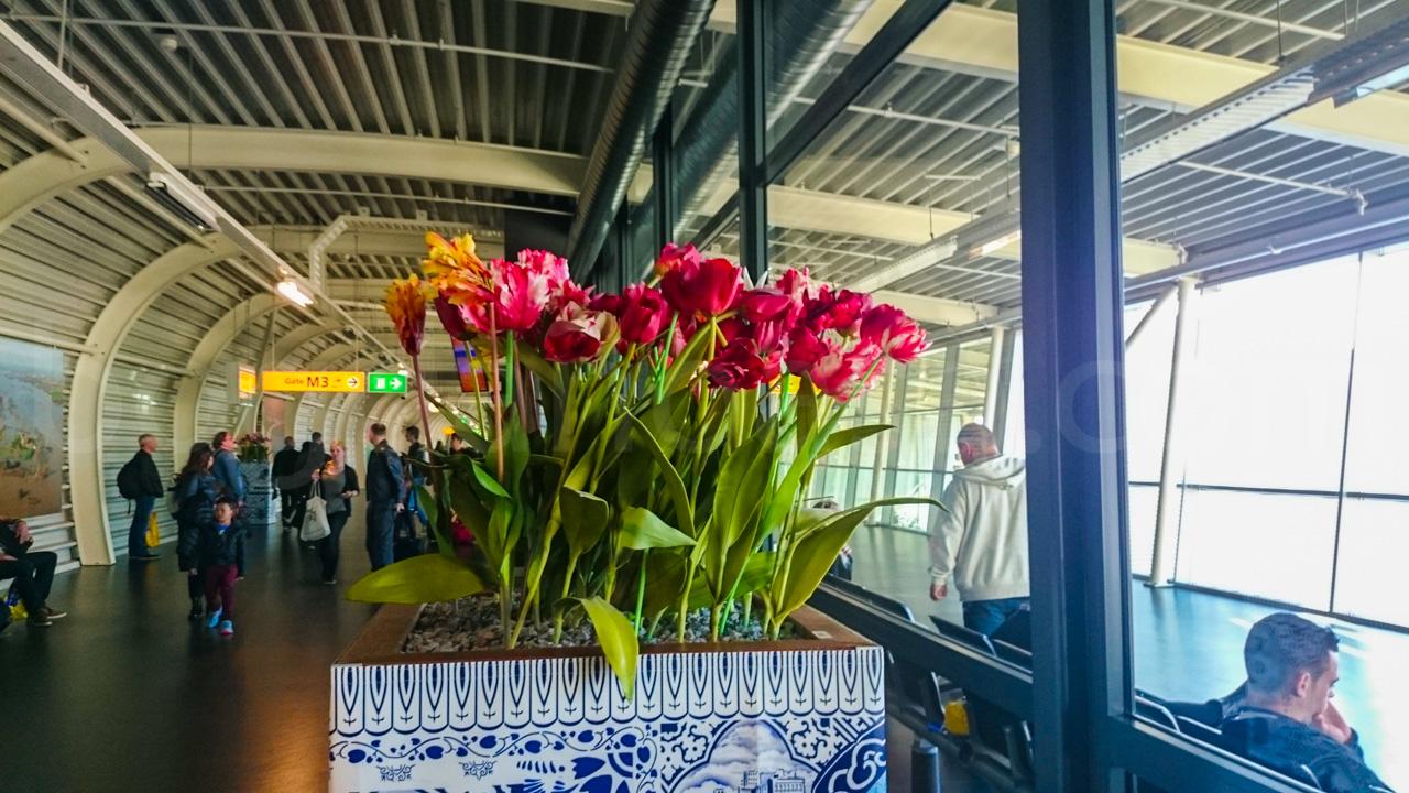 Schiphol Airport Tulips - Keukenhof